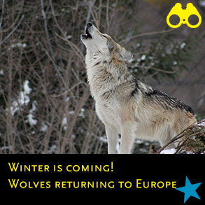 nu 2018 8 winter is coming wolves returning to europe