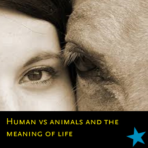 nu 2018 26 humans vs animals and the meaning of life