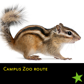 nu 2018 11 Campus Zoo route